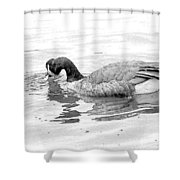 Goose In The Water Shower Curtain
