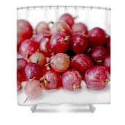 Gooseberries Shower Curtain