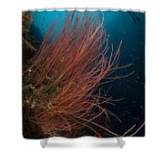 Grand Sea Whip With Diver Shower Curtain