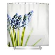 Grape Hyacinth Shower Curtain