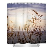 Grass At Sunset Shower Curtain