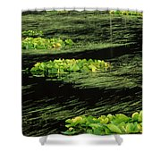 Grasses And Lilies In Beaver Pond Shower Curtain