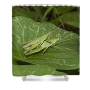 Grasshopper Mating On Grass Leaf Shower Curtain