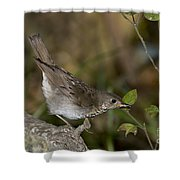 Gray-cheeked Thrush Shower Curtain