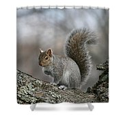 Gray Squirrel Shower Curtain