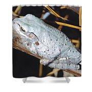 Gray Treefrog Shower Curtain