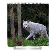 Gray Wolf White Morph Shower Curtain