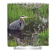 Great Blue Heron At Deboville Slough 2 Shower Curtain