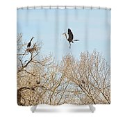 Great Blue Heron Nest Building 3 Shower Curtain