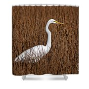 1- Great Egret Shower Curtain