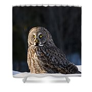 Great Gray Owl Pictures 789 Shower Curtain