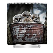 Great Horned Owl Chicks Shower Curtain