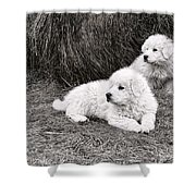 Great Pyramise Pups Shower Curtain