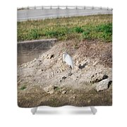 Great White Heron Shower Curtain