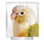 Green-cheeked Conure Pineapple P Shower Curtain