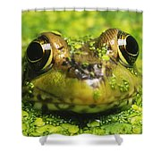 Green Frog Hiding In Duckweed Shower Curtain