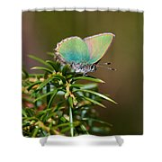 Green Hairstreak Shower Curtain