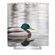 Green-headed Duck Shower Curtain