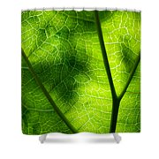 Green Leaf Shower Curtain