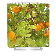 Green Leaves And Mature Oranges On The Tree Shower Curtain