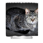 Grey Cat Portrait Shower Curtain