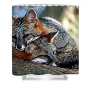 Grey Foxes Shower Curtain