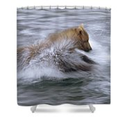 Grizzly Bear Chasing Fish Shower Curtain