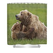 Grizzly Bear Playing With Cub Lake Shower Curtain
