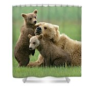 Grizzly Cubs Play With Mom Shower Curtain
