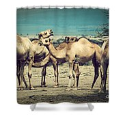 Group Of Camels In Africa Shower Curtain