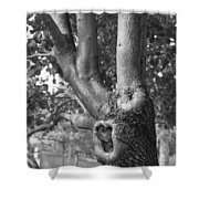 Growth On The Survivor Tree In Black And White Shower Curtain
