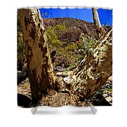 Gum Tree At The Creek V2 Shower Curtain