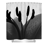 1 H Lily Nectar Drip Bw Shower Curtain