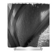1 H Na Lily Bw Shower Curtain