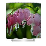 Hanging Hearts Shower Curtain