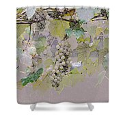 Hanging Thompson Grapes Sultana Shower Curtain