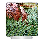 Hapu'u Frond Shower Curtain