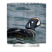 Harlequin Duck Shower Curtain