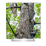 Hawk Hunting For A Squirrel On An Oak Tree Shower Curtain