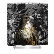 Hawk Of Prey Shower Curtain