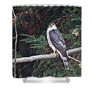 Hawk On Branch Shower Curtain