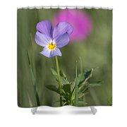 Heart's Ease Wild Viola Shower Curtain