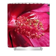 Hibiscus Named Luna Rose Shower Curtain