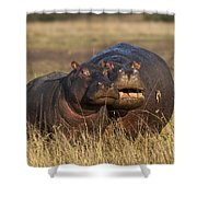 Hippo Cow And Calf Shower Curtain