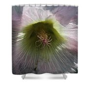 Hollyhock Named Indian Spring Pink Shower Curtain