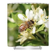 Honeybee And Honeysuckle Shower Curtain