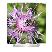 Honeybee On Ironweed Shower Curtain