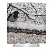 Hooded Crow First Snow Shower Curtain