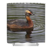 Horned Grebe Shower Curtain