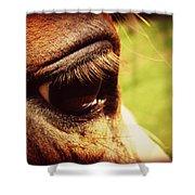 Horse Eye Shower Curtain